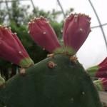 erinsbotanicalgarden (1)