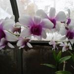 erinsbotanicalgarden (2)