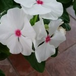erinsbotanicalgarden (4)