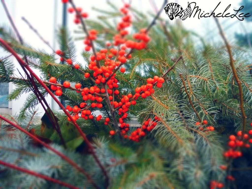 berries_1-16-16_watermarked