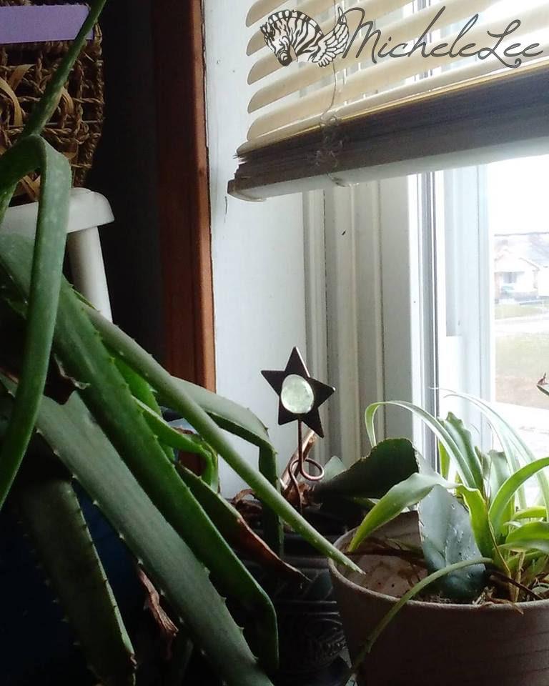 plantlife_1-31-16_watermarked