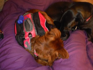 outwardhoundpackreview-6